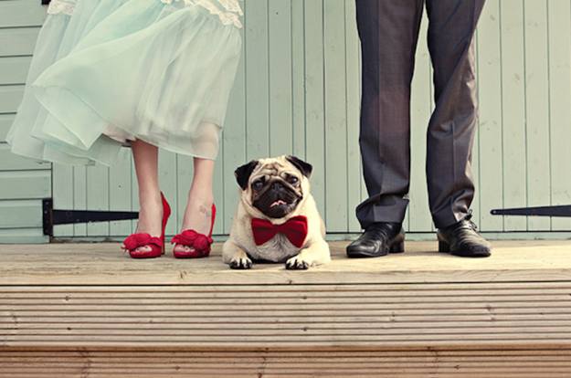 It's always important to ensure your pug's outfit matches your own. Image: dottiephotography.co.uk