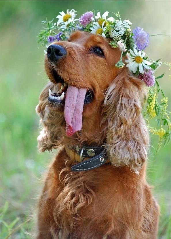 Easy Weddings Animals flower dog colaradospringsweddingflorists